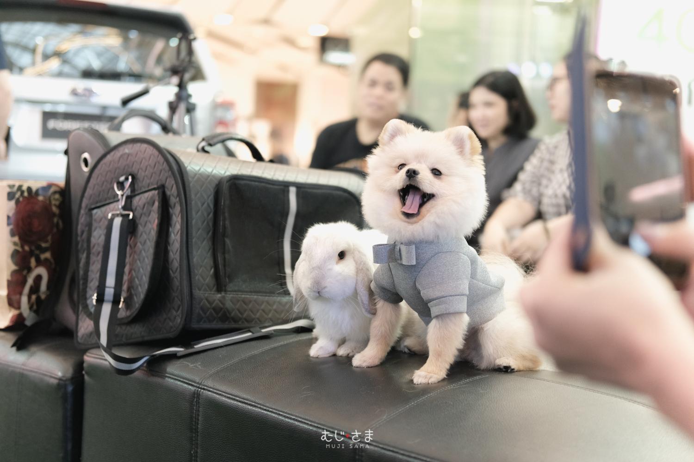 MUJI SAMA Show At SUBARU Pets in Bangkok  🐶🚙❤️