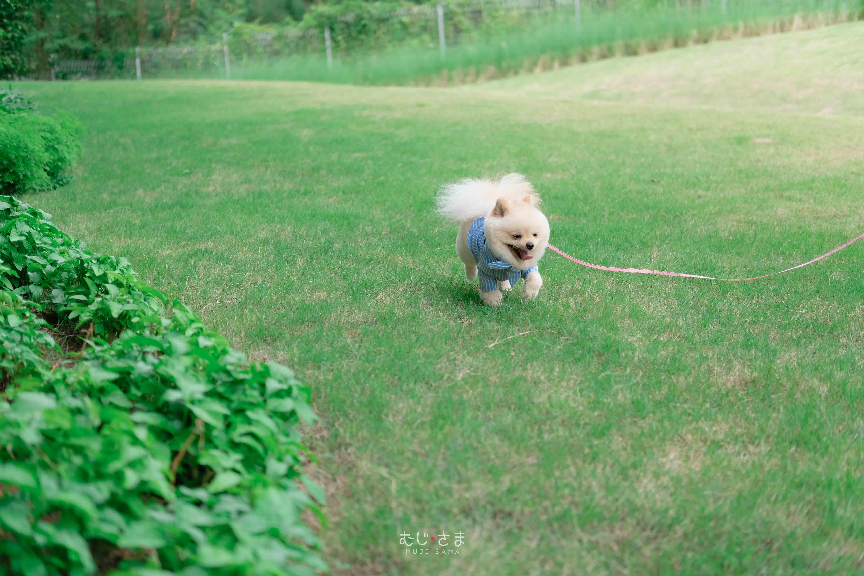น้องหมามูจิกับกระต่ายมิกุพาพักผ่อนที่เขาใหญ่ 🌴🏔